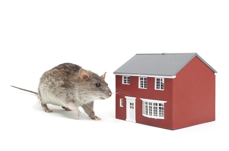 Bay Area Rodent Proofing Oakland Element