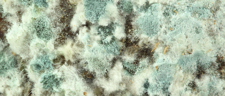 Why Mold And Mildew In Your Attic Is Dangerous To Health