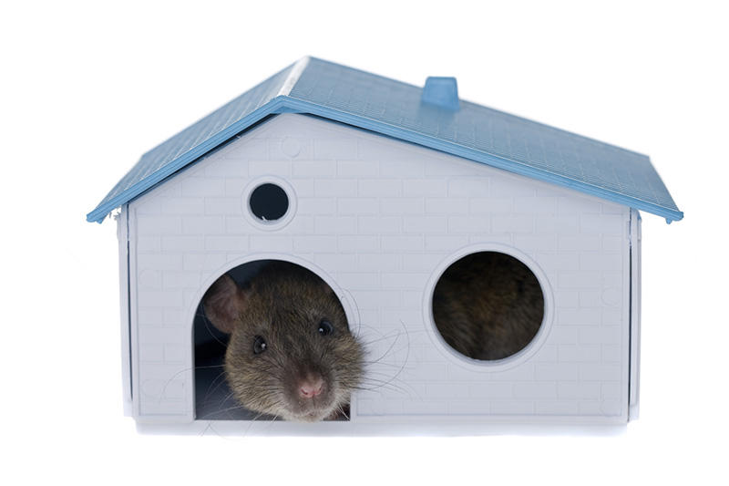 Understanding The Power Of Rodent Proofing Element