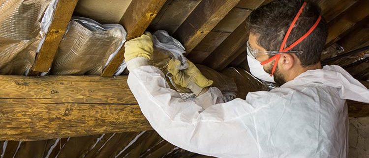 Animal infestation attic restoration services