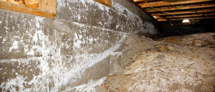 crawlspace cleaning company
