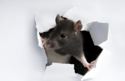 rodent-proofing-your-home