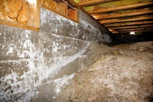 crawl space cleaning service